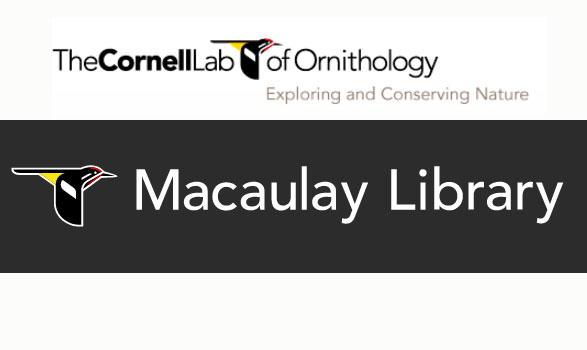 Bibliothèque de sons animaux de la Cornell University